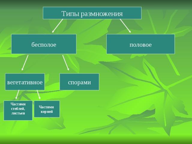 Типы размножения бесполое половое вегетативное спорами Частями корней Частями стеблей, листьев