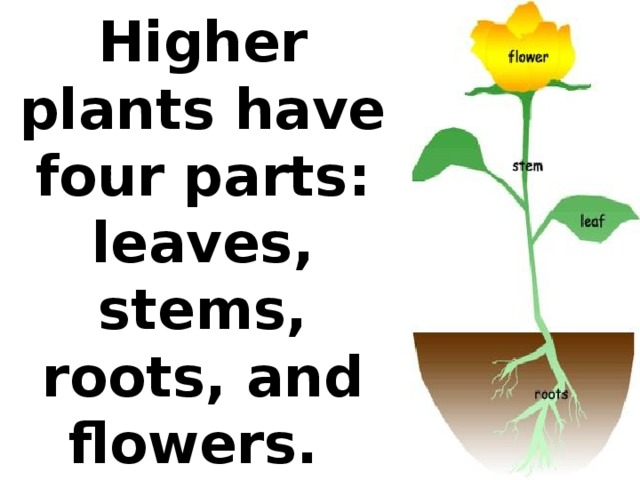 Higher plants have four parts: leaves, stems, roots, and flowers.