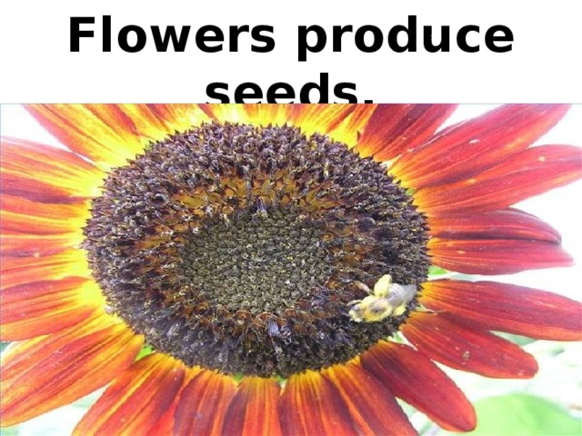 Flowers produce seeds.