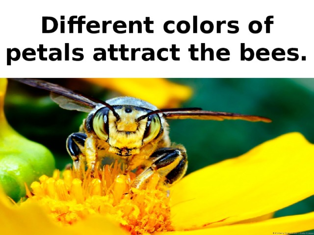 Different colors of petals attract the bees.