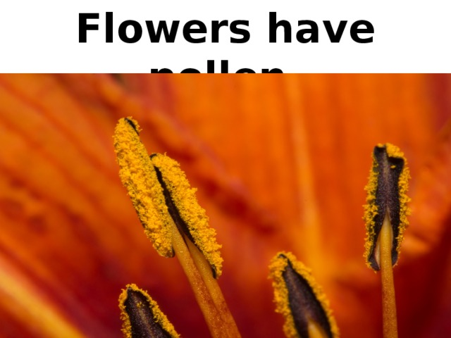 Flowers have pollen.