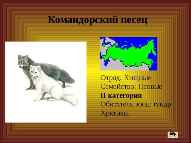 Командорский песец Отряд: Хищные  Семейство: Псовые  II категория  Обитатель зоны тундр Арктики.