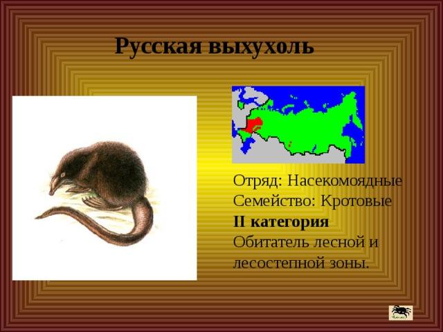 Русская выхухоль Отряд: Насекомоядные  Семейство: Кротовые  II категория  Обитатель лесной и лесостепной зоны.
