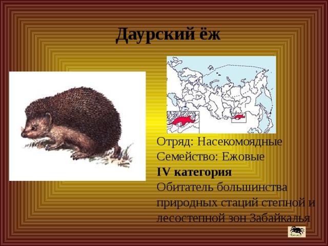 Даурский ёж Отряд: Насекомоядные Семейство: Ежовые IV категория Обитатель большинства природных стаций степной и лесостепной зон Забайкалья