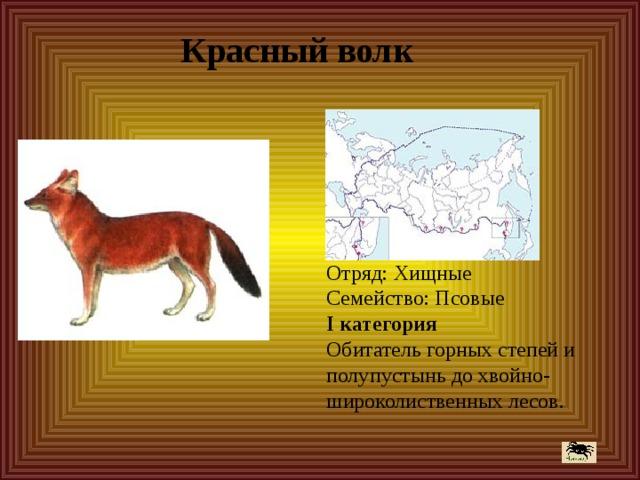 Красный волк Отряд: Хищные Семейство: Псовые I категория Обитатель горных степей и полупустынь до хвойно-широколиственных лесов.