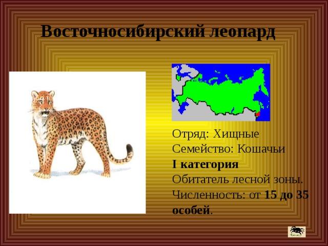 Восточносибирский леопард Отряд: Хищные  Семейство: Кошачьи  I категория  Обитатель лесной зоны.  Численность: от 15 до 35 особей .