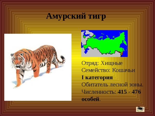 Амурский тигр Отряд: Хищные  Семейство: Кошачьи  I категория  Обитатель лесной зоны.  Численность: 415 - 476  особей .