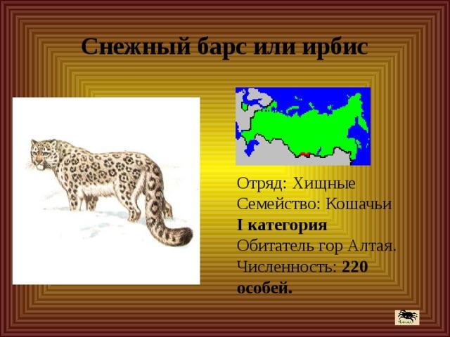 Снежный барс или ирбис Отряд: Хищные  Семейство: Кошачьи  I категория  Обитатель гор Алтая.  Численность: 220 особей.