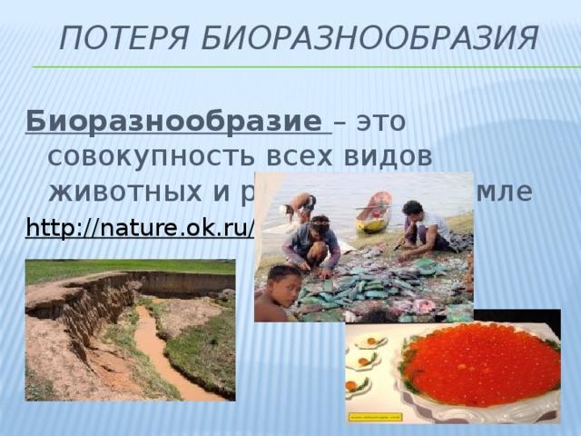 Потеря биоразнообразия Биоразнообразие – это совокупность всех видов животных и растений на Земле http://nature.ok.ru/