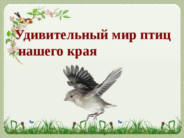 Удивительный мир птиц  нашего края