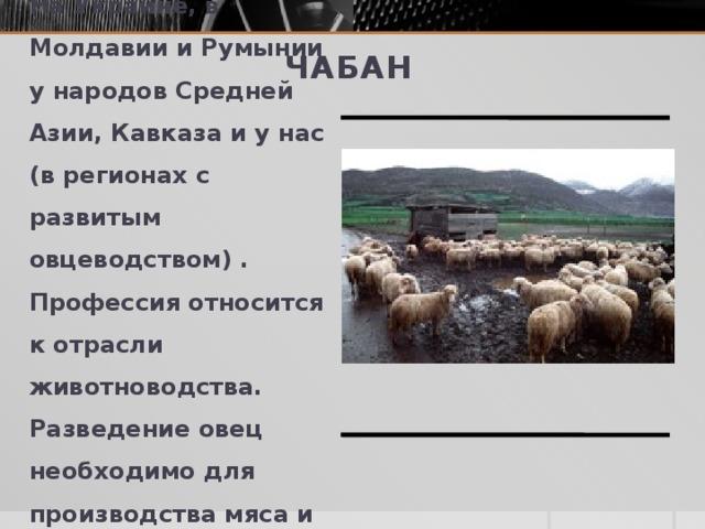 Чабан Чабан - пастух овец. На Украине, в Молдавии и Румынии у народов Средней Азии, Кавказа и у нас (в регионах с развитым овцеводством) . Профессия относится к отрасли животноводства. Разведение овец необходимо для производства мяса и шерсти.