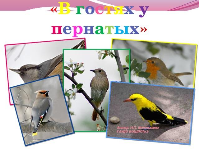 « В  г о с т я х у  п е р н а т ы х »   Автор: Н.П. Шаповалова ГАУДО БОЦДЮТиЭ