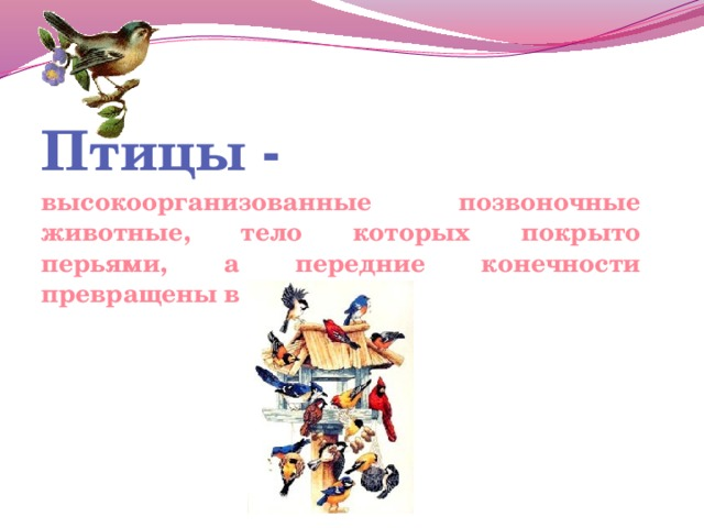 Птицы - высокоорганизованные позвоночные животные, тело которых покрыто перьями, а передние конечности превращены в крылья.