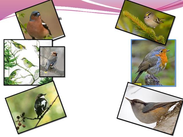 Птицы отряды Семейства Виды