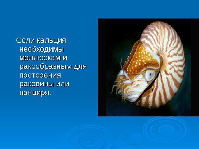 Соли кальция необходимы моллюскам и ракообразным для построения раковины или панциря.