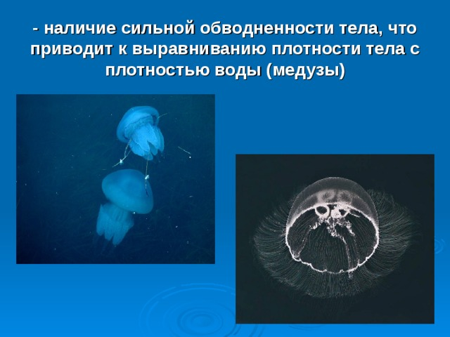 - наличие сильной обводненности тела, что приводит к выравниванию плотности тела с плотностью воды (медузы)