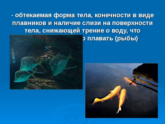 - обтекаемая форма тела, конечности в виде плавников и наличие слизи на поверхности тела, снижающей трение о воду, что позволяет быстро плавать (рыбы)