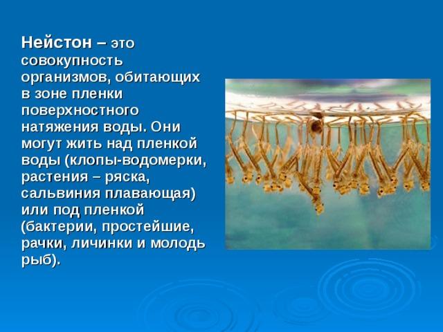 Нейстон – это совокупность организмов, обитающих в зоне пленки поверхностного натяжения воды. Они могут жить над пленкой воды (клопы-водомерки, растения – ряска, сальвиния плавающая) или под пленкой (бактерии, простейшие, рачки, личинки и молодь рыб).