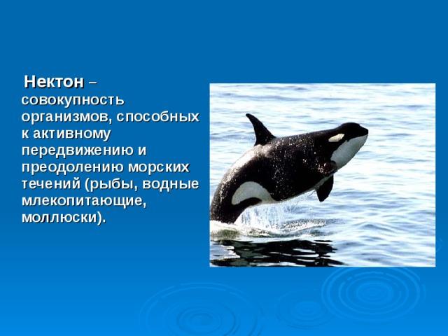 Нектон – совокупность организмов, способных к активному передвижению и преодолению морских течений (рыбы, водные млекопитающие, моллюски).