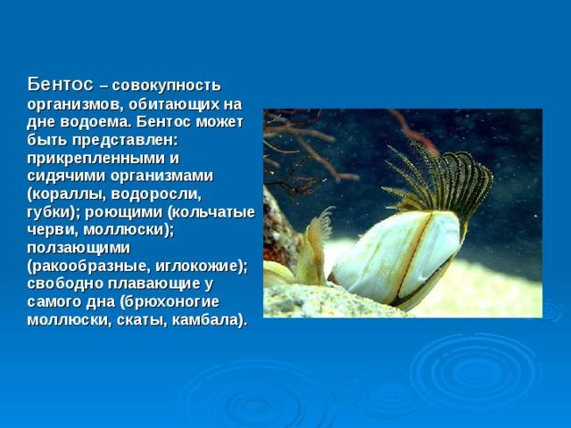Бентос – совокупность организмов, обитающих на дне водоема. Бентос может быть представлен: прикрепленными и сидячими организмами (кораллы, водоросли, губки); роющими (кольчатые черви, моллюски); ползающими (ракообразные, иглокожие); свободно плавающие у самого дна (брюхоногие моллюски, скаты, камбала).