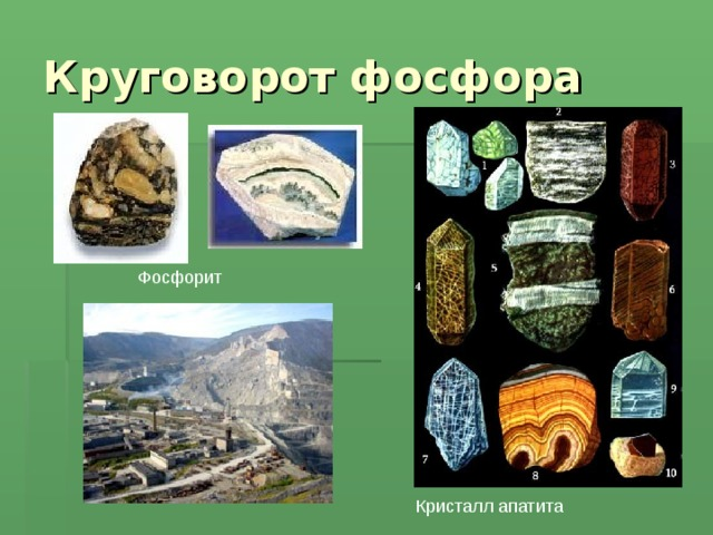 Круговорот фосфора Фосфорит Кристалл апатита