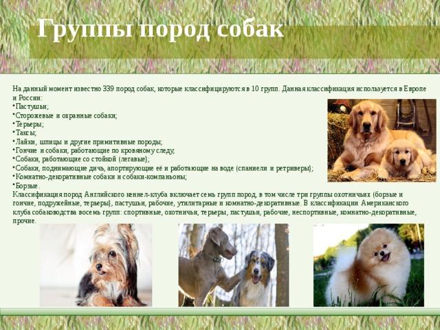 Группы пород собак   На данный момент известно 339 пород собак, которые классифицируются в 10 групп. Данная классификация используется в Европе и России: Пастушьи; Сторожевые  и охранные собаки; Терьеры; Таксы; Лайки,  шпицы  и другие примитивные породы; Гончие  и собаки, работающие по кровяному следу; Собаки, работающие со стойкой (легавые); Собаки, поднимающие дичь, апортирующие её и работающие на воде (спаниели  и  ретриверы); Комнатно-декоративные собаки  и собаки-компаньоны; Борзые. Классификация пород  Английского кеннел-клуба  включает семь групп пород, в том числе три группы охотничьих (борзые и гончие, подружейные, терьеры), пастушьи, рабочие, утилитарные и комнатно-декоративные. В классификации  Американского клуба собаководства  восемь групп: спортивные, охотничьи, терьеры, пастушьи, рабочие, неспортивные, комнатно-декоративные, прочие.