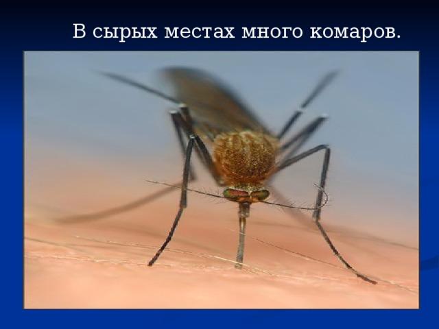 В сырых местах много комаров.
