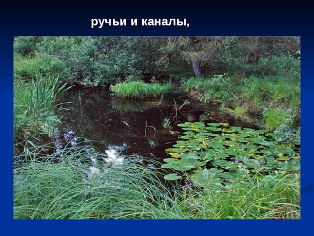ручьи и каналы,