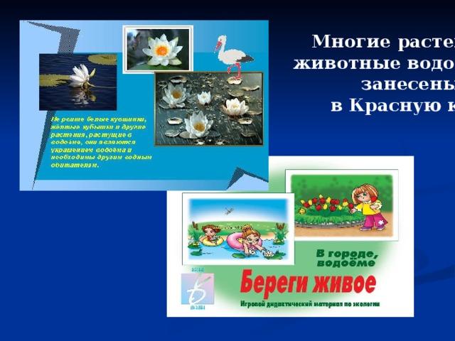 Многие растения и  животные водоёмов  занесены  в Красную книгу.