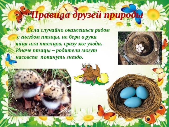Правила друзей природы   Если случайно окажешься рядом  с гнездом птицы, не бери в руки яйца или птенцов, сразу же уходи. Иначе птицы – родители могут насовсем покинуть гнездо.