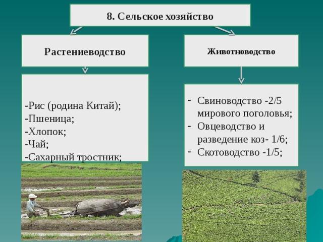 8. Сельское хозяйство   Растениеводство Животноводство -Рис (родина Китай); -Пшеница; -Хлопок; -Чай; -Сахарный тростник; -Овощи; -Фрукты;