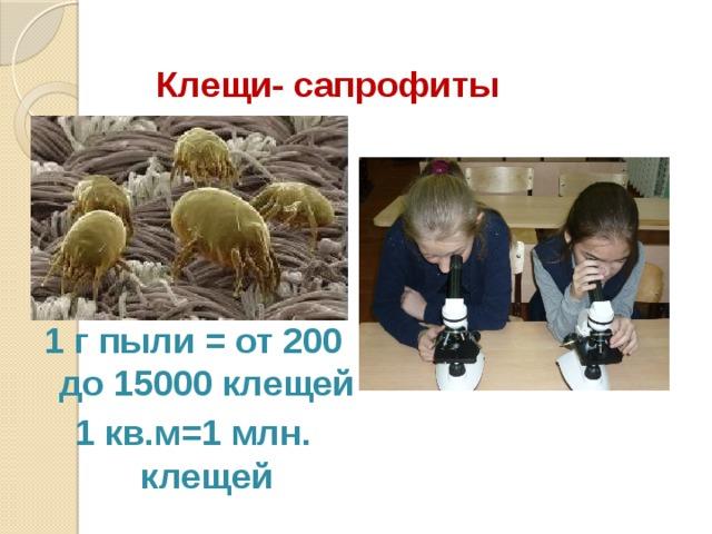 Клещи- сапрофиты 1 г пыли = от 200 до 15000 клещей 1 кв.м=1 млн. клещей
