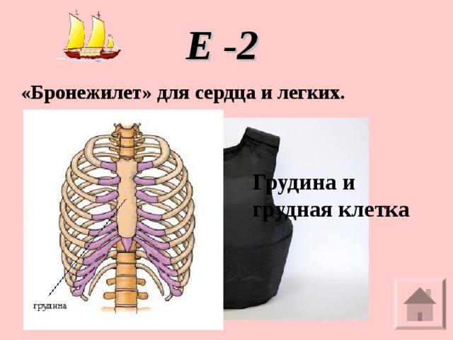Е -2 «Бронежилет» для сердца и легких. Грудина и грудная клетка