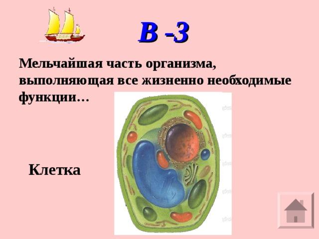 В -3 Мельчайшая часть организма, выполняющая все жизненно необходимые функции… Клетка