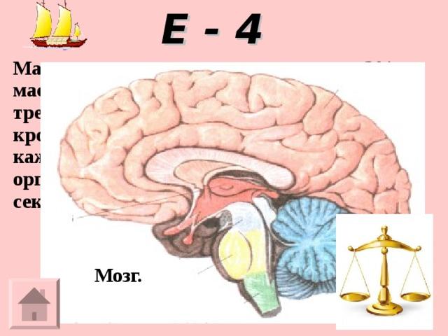 Е - 4 Масса этого органа составляет только 2% массы человеческого тела, но для работы ему требуется 15-20% насыщенной кислородом крови, которую сердце выталкивает при каждом сокращении. Если снабжение этого органа кровью прекращается хотя бы на 10 секунд, мы теряем сознание. Мозг.