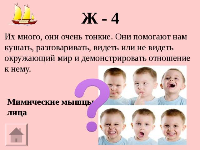 Ж - 4 Их много, они очень тонкие. Они помогают нам кушать, разговаривать, видеть или не видеть окружающий мир и демонстрировать отношение к нему. Мимические мышцы лица