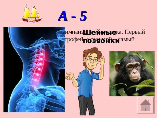 А - 5 Их 7 и у жирафа, и у шимпанзе, и у человека. Первый – атлант, второй – эпистрофей, а седьмой – самый заметный. Что это?   Шейные позвонки