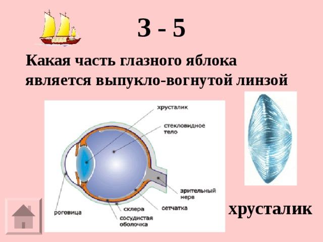 З - 5   Какая часть глазного яблока является выпукло-вогнутой линзой хрусталик