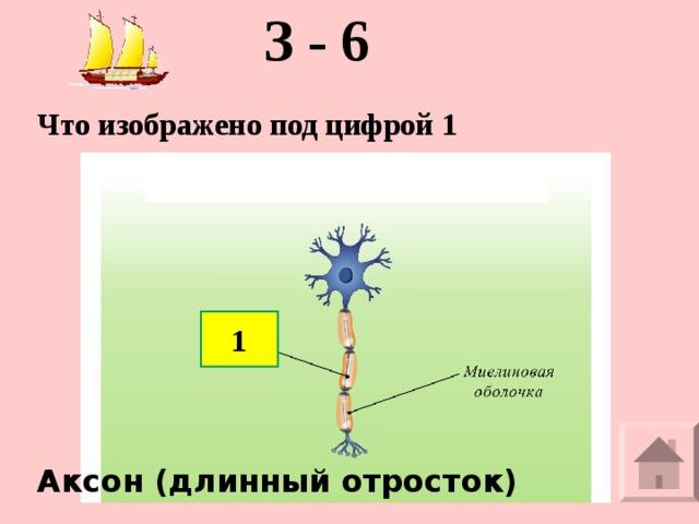 З - 6 Что изображено под цифрой 1  1 Аксон (длинный отросток)