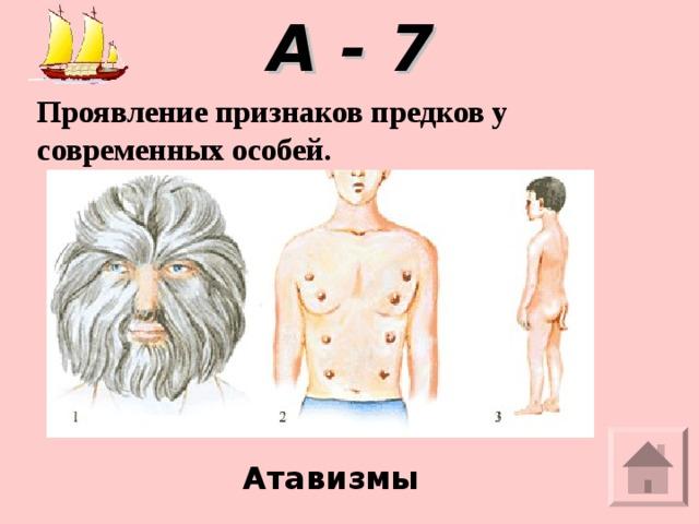 А - 7 Проявление признаков предков у современных особей.  Атавизмы