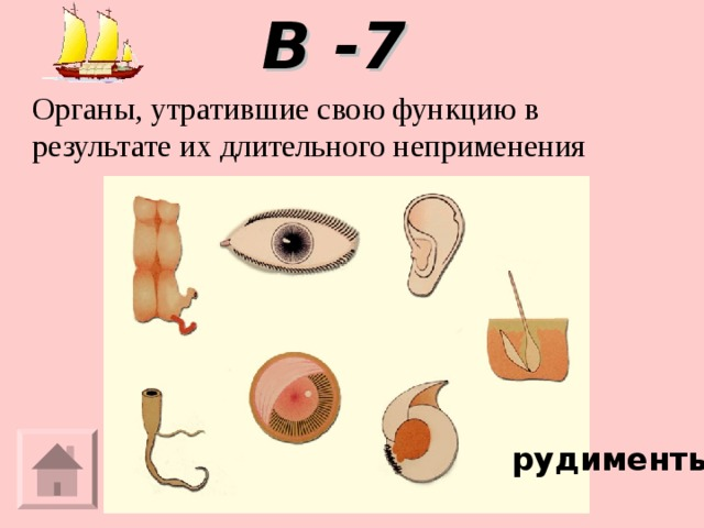 В -7 Органы, утратившие свою функцию в результате их длительного неприменения рудименты