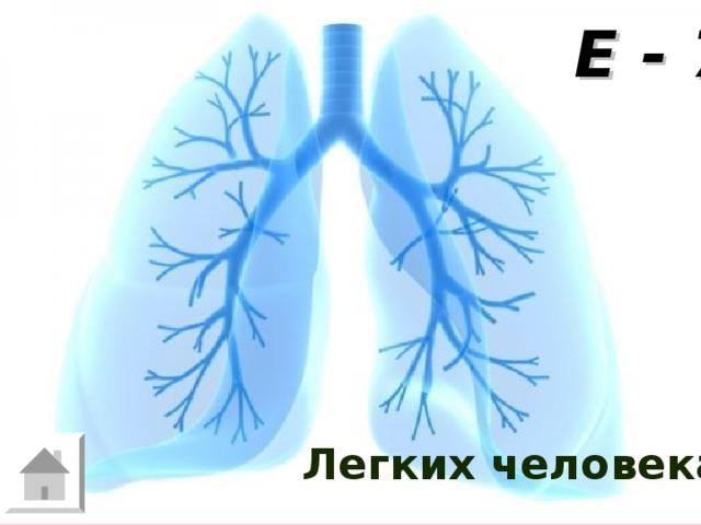 Е - 7 Площадь теннисного корта примерно  ровна площади одного из органов человеческого организма. Какого? Легких человека