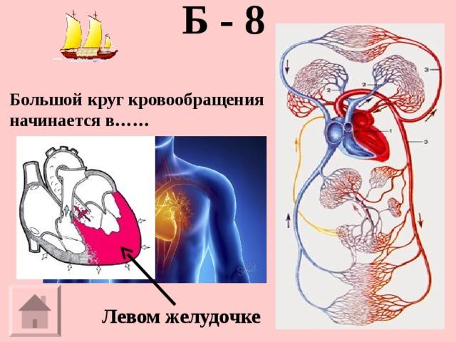 Б - 8   Большой круг кровообращения начинается в…… Левом желудочке