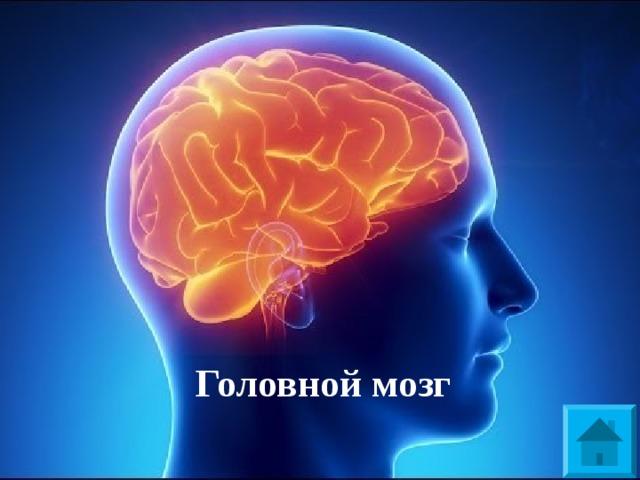 В - 1   Центр приема и анализа информации у человека Головной мозг