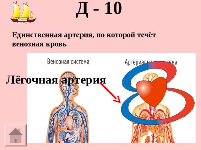 Д - 10   Единственная артерия, по которой течёт венозная кровь Лёгочная артерия