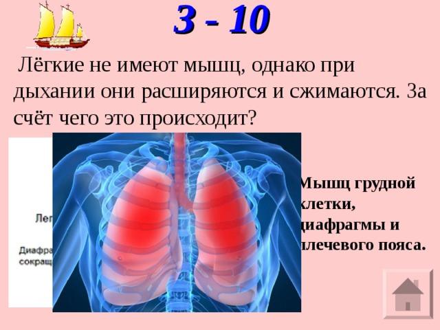 З - 10    Лёгкие не имеют мышц, однако при дыхании они расширяются и сжимаются. За счёт чего это происходит? Мышц грудной клетки, диафрагмы и плечевого пояса.