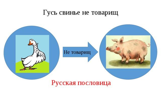 Гусь свинье не товарищ Не товарищ Русская пословица