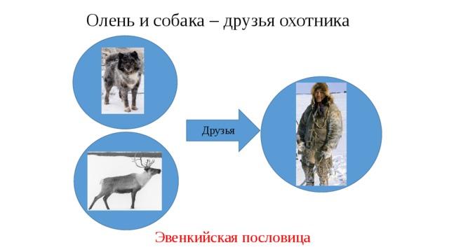 Олень и собака – друзья охотника Друзья Эвенкийская пословица