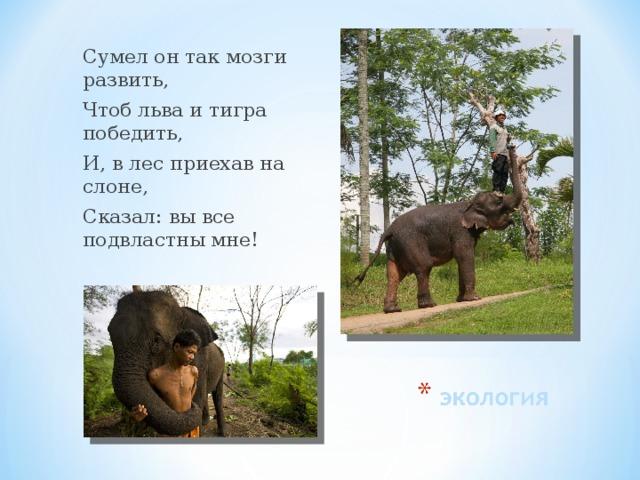 Сумел он так мозги развить, Чтоб льва и тигра победить, И, в лес приехав на слоне, Сказал: вы все подвластны мне!