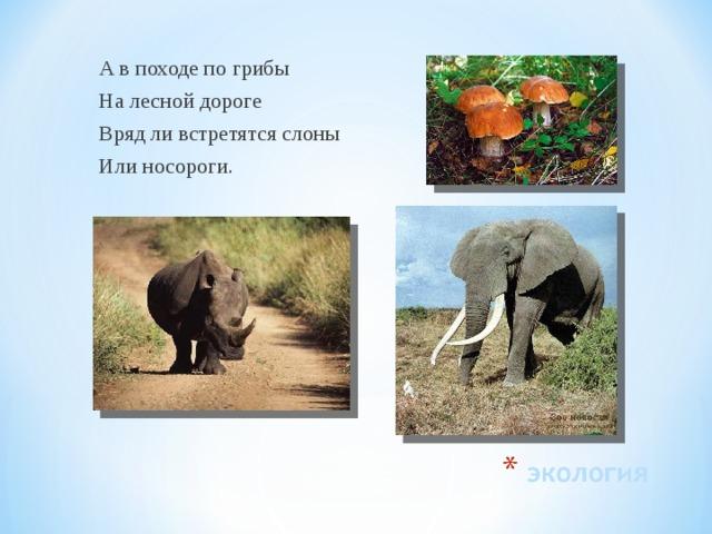 А в походе по грибы На лесной дороге Вряд ли встретятся слоны Или носороги.